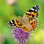 Stummer Frühling – Ursachen und Auswirkungen des Insektenrückgangs