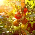 Permakultur – Wirtschaften für eine zukunftsfähige Entwicklung