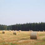 Humuswende – Wie die Landwirtschaft zum Klimaretter wird